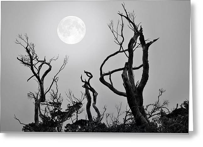 Frightful Greeting Cards - Moon Whisperer Greeting Card by Edwin Verin