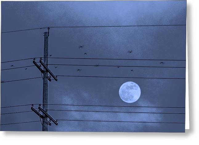 Bird In Flight Greeting Cards - Moonbeams Greeting Card by Don Spenner