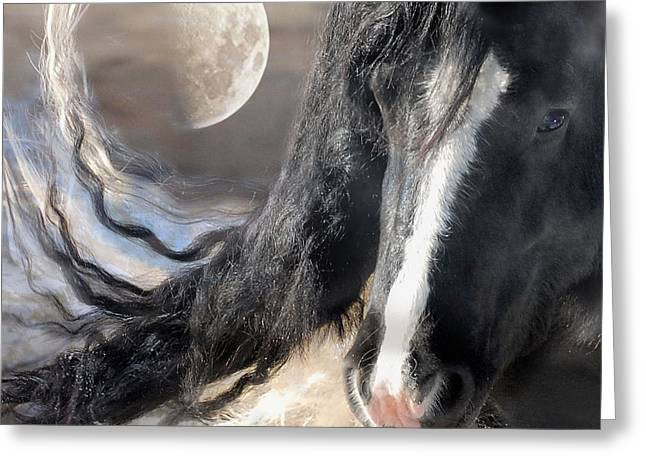 Horses Art Print Greeting Cards - Moonlight and Valentino Greeting Card by Fran J Scott