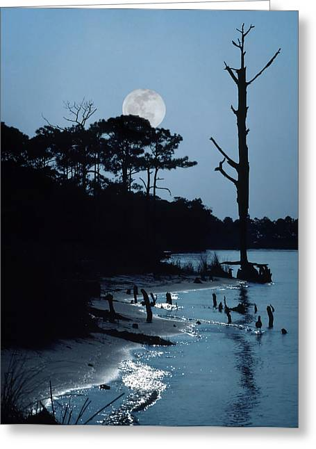 Moon Beach Greeting Cards - Moonlight Greeting Card by David and Carol Kelly