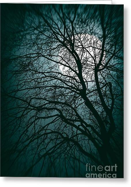 Moonlight Forest Greeting Card by Carlos Caetano