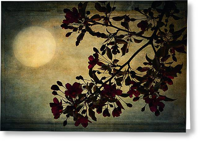 Moonlight Greeting Card by Maria Angelica Maira