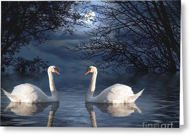 Aquatic Bird Greeting Cards - Moonlight Swim Greeting Card by Juli Scalzi
