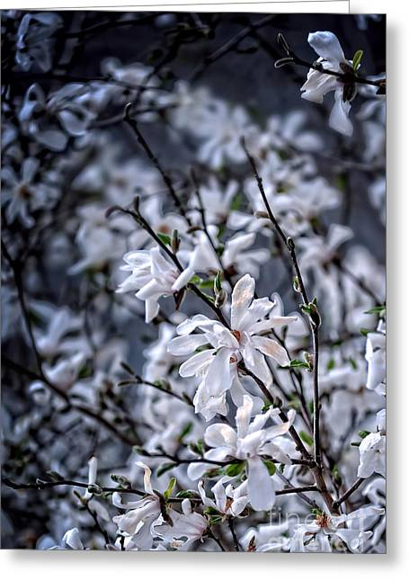 Moonlit Greeting Cards - Moonlit Blossoms Greeting Card by HD Connelly