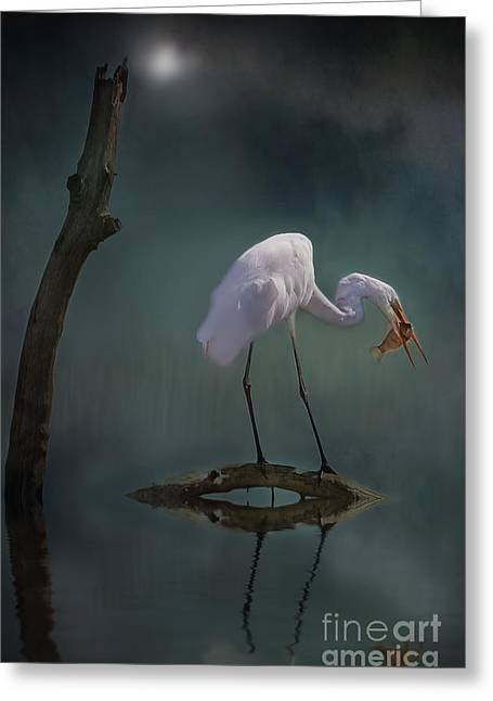 Nature Scene Greeting Cards - Moonlit Egret Greeting Card by Kym Clarke