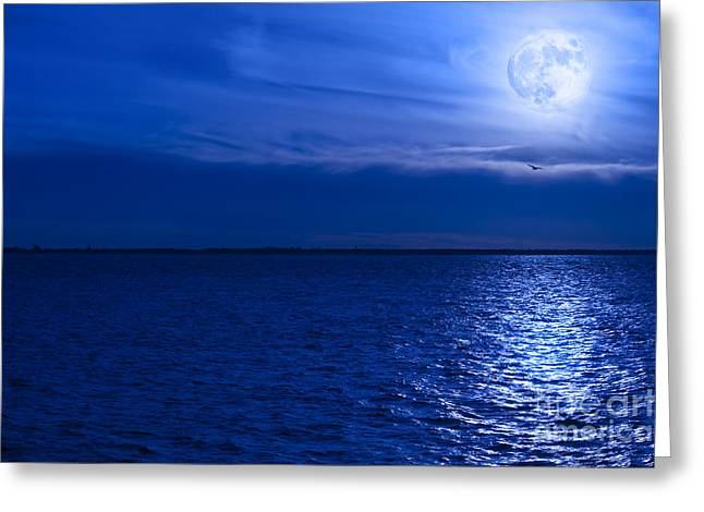 Clear Sky Images Greeting Cards - Moonlit Flight Greeting Card by Clear Sky Images