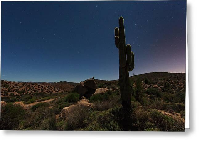 Saguaro Cactus Greeting Cards - Moonlit Saguaro Greeting Card by Rick Berk