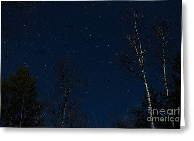 Constellations Greeting Cards - Moonlit Starry Night 2 Greeting Card by Dawna  Moore Photography