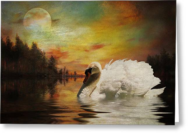 Pamela Phelps Greeting Cards - Moonlit Swan Greeting Card by Pamela Phelps