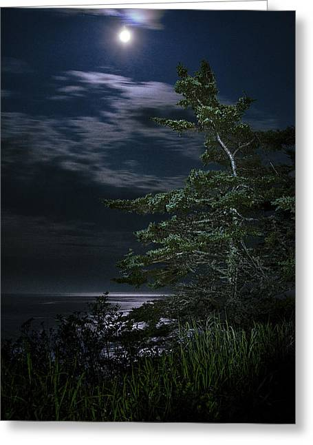 Quoddy Head State Park Greeting Cards - Moonlit Treescape Greeting Card by Marty Saccone