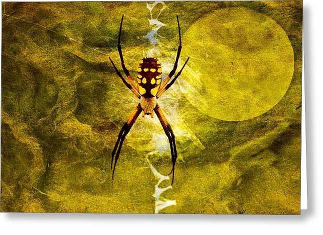 Spider Digital Art Greeting Cards - Moonlit Web Greeting Card by J Larry Walker