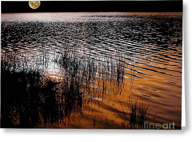 After Sunset Greeting Cards - Moonrise after Sunset Greeting Card by Kaye Menner