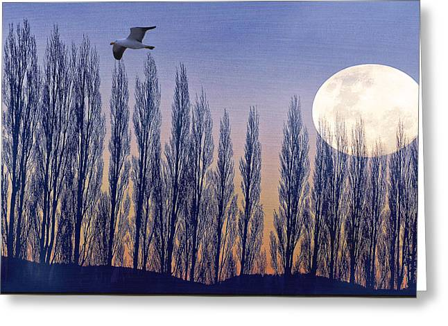 Sea Moon Full Moon Greeting Cards - Moonrise Greeting Card by Dean Hohn