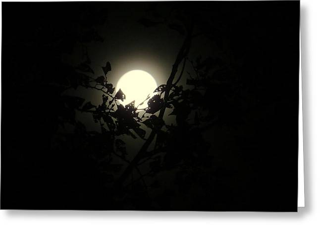 Moonrise Greeting Cards - Moonrise Greeting Card by Emily  Froese