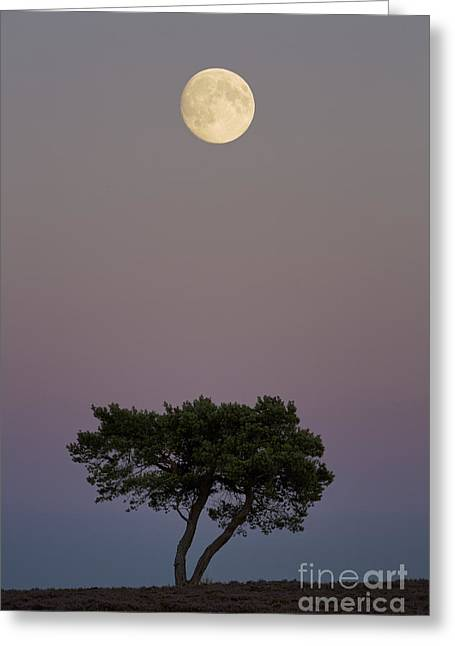 The North Greeting Cards - Moonrise over Wheeldale Moor Yorkshire Greeting Card by John Potter