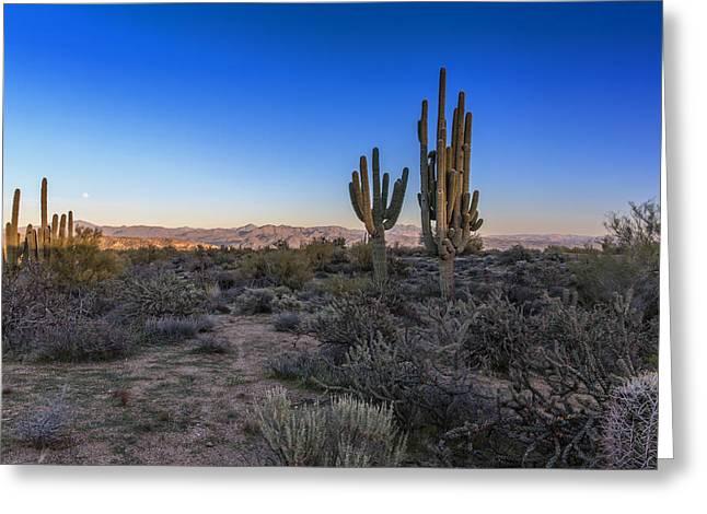 Moonrise Greeting Cards - Moonrise Over Saguaro Greeting Card by Rick Berk