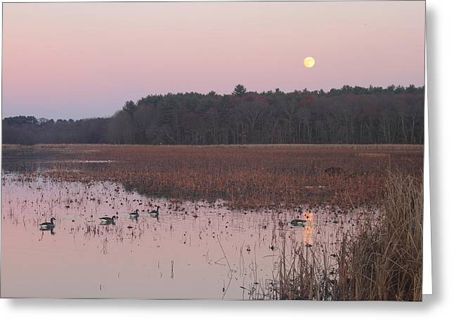 Concord Massachusetts Photographs Greeting Cards - Moonrise over Waterfowl Pond Greeting Card by John Burk