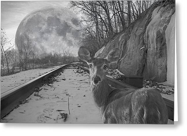 Steel Rail Greeting Cards - Moonshine Deer Tracks Greeting Card by Betsy A  Cutler