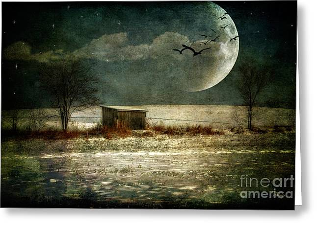 Winter Night Greeting Cards - Moonstruck Greeting Card by Lois Bryan