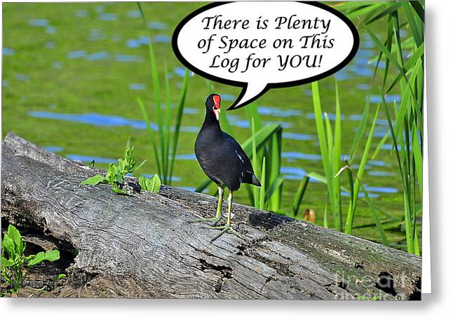 Humorous Greeting Cards Greeting Cards - Moorhen Space For You Card Greeting Card by Al Powell Photography USA