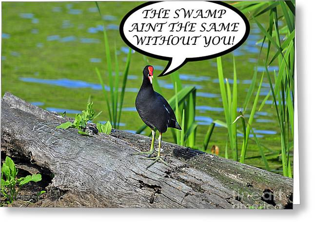 Humorous Greeting Cards Greeting Cards - Moorhen Swamp Card Greeting Card by Al Powell Photography USA