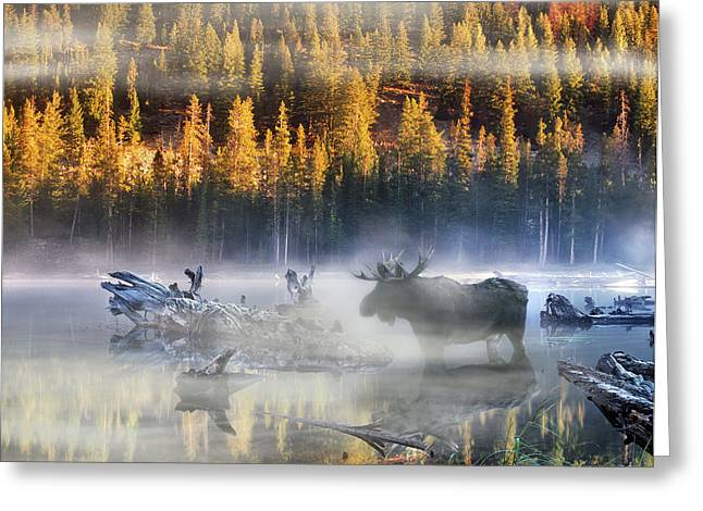 Most Photographs Greeting Cards - Moose Lake Greeting Card by Leland D Howard