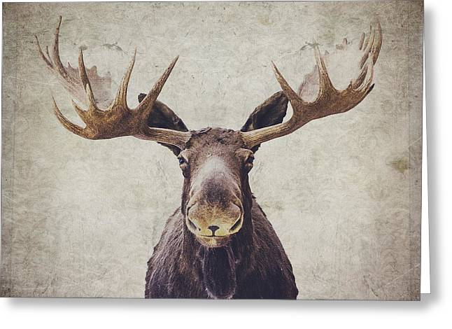 Textured Photograph Greeting Cards - Moose Greeting Card by Nastasia Cook