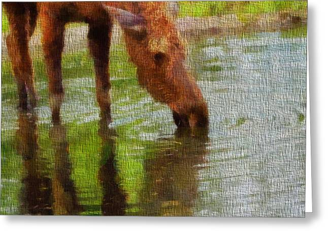 Moose In Water Greeting Cards - Moose On Canvas Greeting Card by Dan Sproul