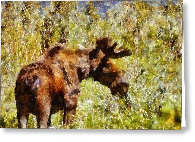 Moose Bull Greeting Cards - Moose Portrait  Greeting Card by Dan Sproul