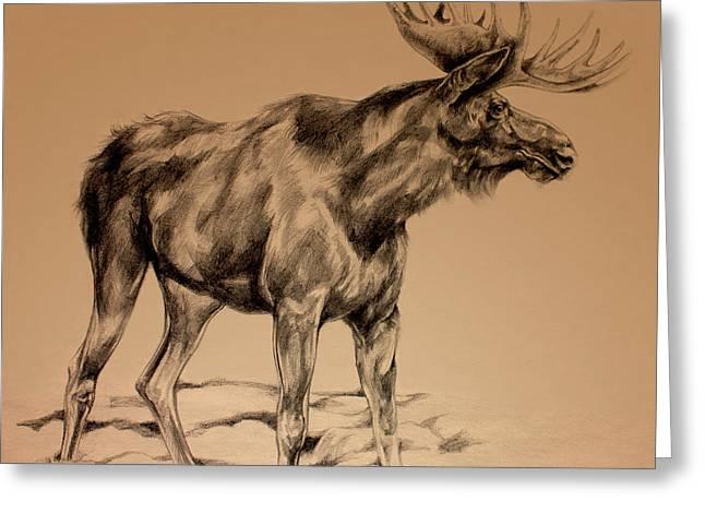 Michigan Drawings Greeting Cards - Moose Sketch Greeting Card by Derrick Higgins