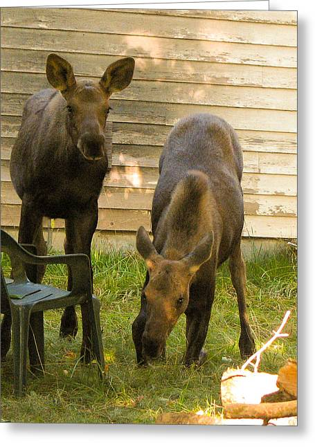 Stein Greeting Cards - Moose Twins Greeting Card by Curts Stein