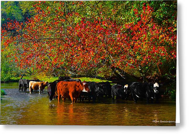 Fallscape Greeting Cards - Mooving Into Fall Greeting Card by Mike  Quesinberry