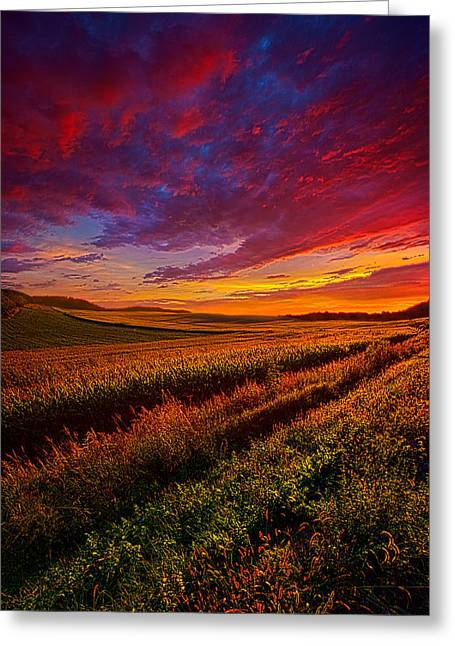 Autumn Morning Greeting Cards - More Than A Feeling Greeting Card by Phil Koch
