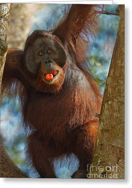 Ape. Great Ape Greeting Cards - More Than a Mouthful Greeting Card by Ashley Vincent