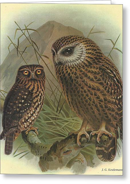 J.g. Greeting Cards - Morepork and Laughing Owl Greeting Card by J G Keulemans