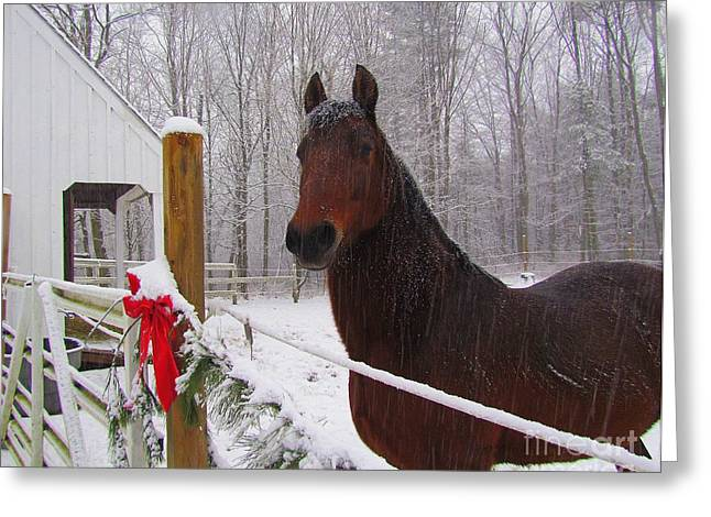 Morgan Horse Christmas Greeting Card by Elizabeth Dow