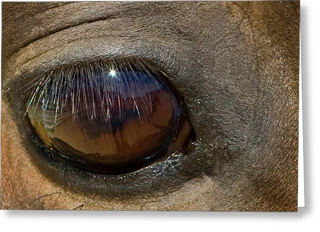 Morgan Horse With Starburst In Eye Greeting Card by Piperanne Worcester