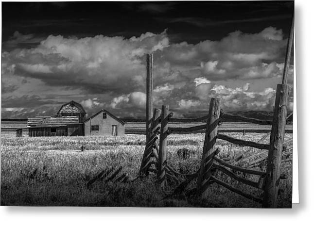 Brown Tones Greeting Cards - Mormon Row Farm in Black and White Greeting Card by Randall Nyhof
