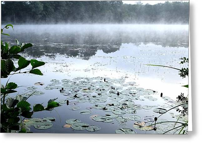Morning at lake Greeting Card by Chi Casting