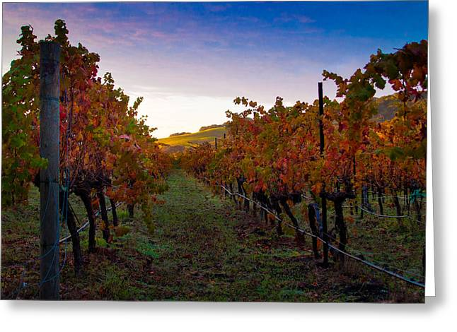 Grapevine Greeting Cards - Morning at the Vineyard Greeting Card by Bill Gallagher