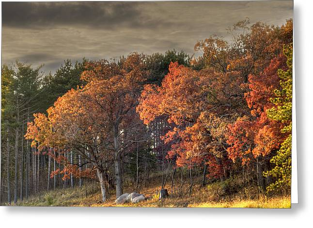 Tommytroutphoto Greeting Cards - Morning Beauty Greeting Card by Thomas Young