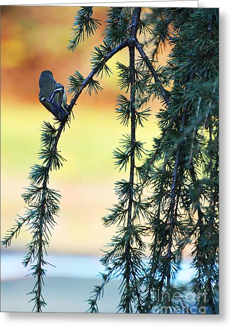 Life On Earth Greeting Cards - Morning bird song Greeting Card by adSpice Studios