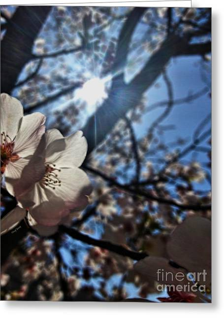 Boutique Design Greeting Cards - Morning Blossoms  painted Greeting Card by Cheryl Young