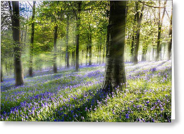 Ashes Greeting Cards - Morning Bluebells Greeting Card by Ian Hufton