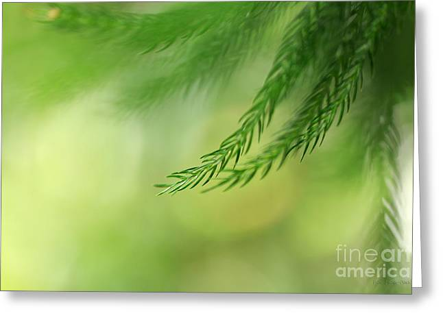 © Beve Brown-clark Greeting Cards - Morning Bokeh Greeting Card by Reflective Moments  Photography and Digital Art Images