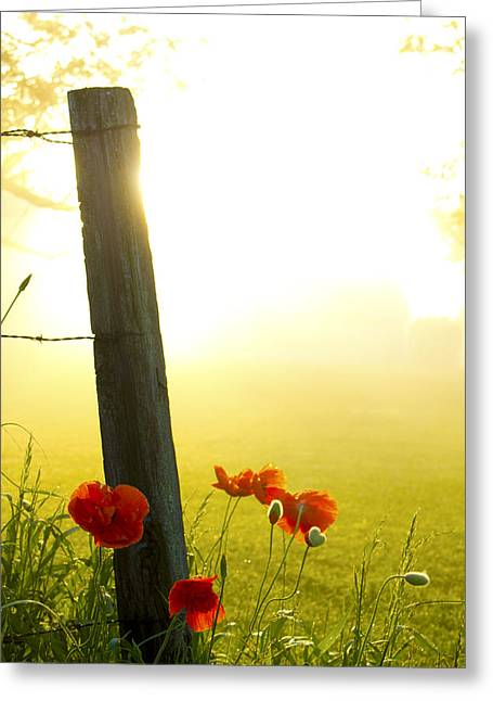 Indiana Flowers Greeting Cards - Morning bouquet 2 Greeting Card by Michael Huddleston