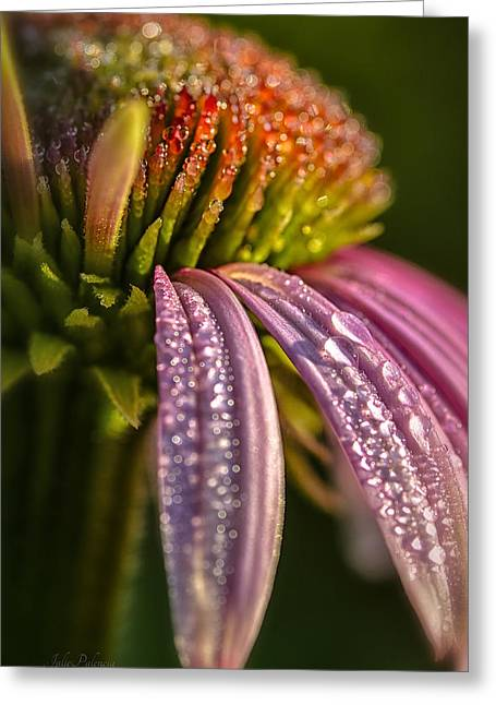 Julie Palencia Photography Greeting Cards - Morning Coneflower Greeting Card by Julie Palencia
