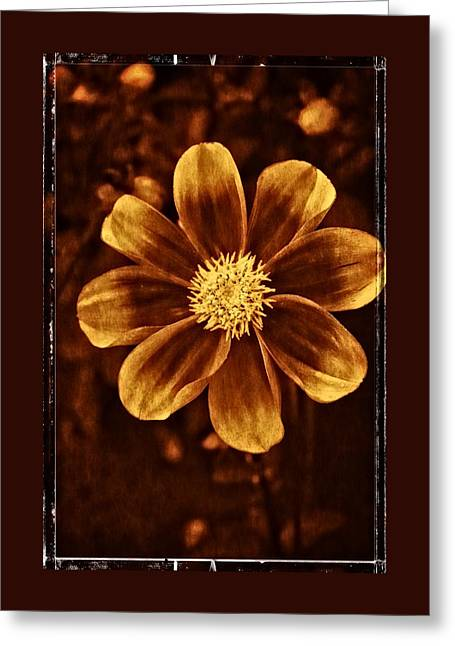 Dahlia Greeting Cards - Morning Dahlia Greeting Card by Thom Zehrfeld