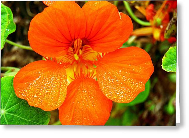 Dew Covered Flower Greeting Cards - Morning Dew Greeting Card by Andrew  Stoffel