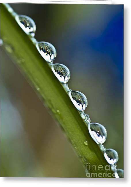 Morning Dew Drops 2 Greeting Card by Heiko Koehrer-Wagner